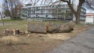 Oppdatering! Vedkommende som har felt trærne har gjort en henvendelse til Plan og bygningsetaten 20.mars med forespørsel om felling av trær på eiendommen. Plan og bygningsetaten har 23 mars. […]