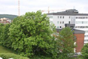 Trær 002