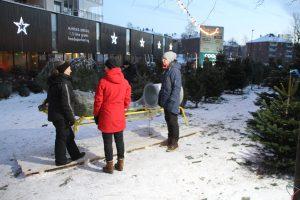 Juletrær på hasle 021