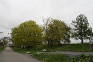 turvei-d2-ved-hagekvartelt-mai-2010