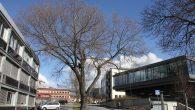 Da er det nok klart at ytterligere 2 av de gamle store trærne på Ensjø skal hugges ned for å få plass til boliger. Det er Neptun Properties […]