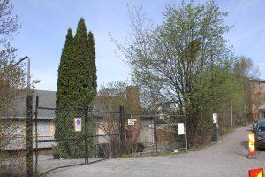 Trær på Ensjø 2 (1)