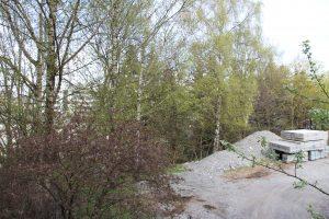 Trær på Ensjø 2 (3)