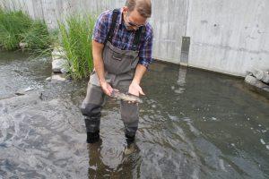 fiskedød (26)
