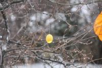 Påskeegg treet 013k.jpg