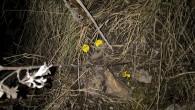 Isør-vest vendte skråninger på Ensjø kan man se at våren tydelig er i anmarsj, for blant tørre strå og blader har hestehoven startet å blomstre. Det var to dager med […]