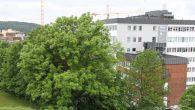 De store trærne i Oslo er ikke bare vakre, de skaper verdier og er til nytte for hele byen. Derfor er mange av dem vernet, og folk flest […]