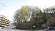 I forbindelse med 4 boligutbyggings prosjekter på næringstomter i Malerhaugveien vil mange trær bli kappet ned. Dette gjelder eiendommene Malerhaugveien 19-23, 20, 25 og 28. Det dreier seg potensielt om […]