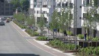 Ensjø aktuell Informasjon har i flere saker fokusert på trær som kappes ned i forbindelse med utbyggingsprosjekter. I prosjektet Ensjø fra «bilby til boligby» har det blitt ofret mye trær […]