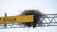 Du har kanskje merket det nå i påsken, det er mye fuglelyder igjennom hele døgnet, men spesielt på morgen og kveld. Det er våren og det varme været som […]