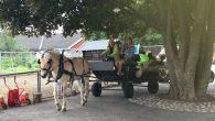 Kampen Barnebondegård samler inn penger til nødvendig fornyelse av vogner til bruk i oppdragskjøring med hest. De sier selv «Våre gamle oppdragsvogner må byttes ut etter lang tjeneste, det er […]