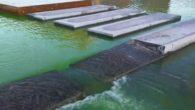 Det er kanskje flere som lurer på hva som har skjedd når Hovinbekken på Ensjø er blitt helt grønn. I videoen kan du se at det både i dammen ved […]