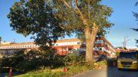 Den kraftige vinden som har vært på Ensjø i dag har medført skader på trær. En av skadene er at den siste gjenværende Svartpoppelen som står i Grønvoll alle på […]